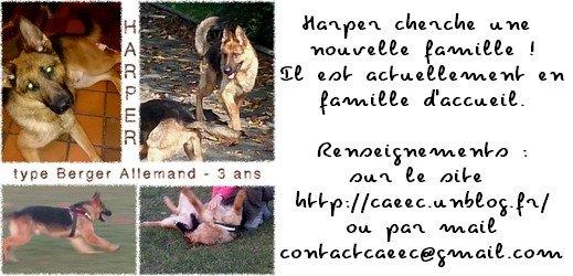 Harper cherche une nouvelle famille - #caeec.unblog.fr
